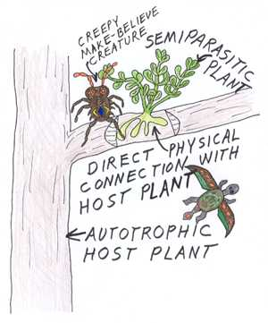 Why does plants and Do fungi use photosynthesis